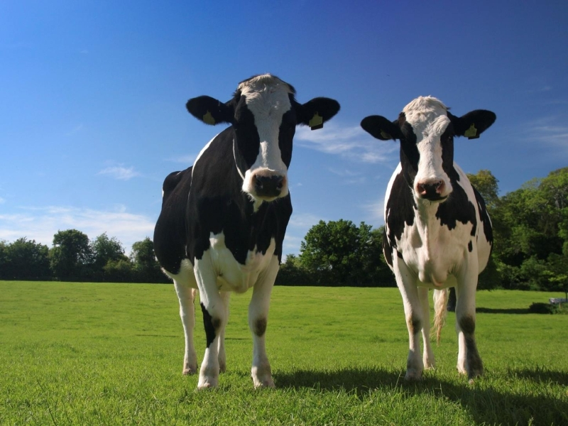 Global Dairy Products Report