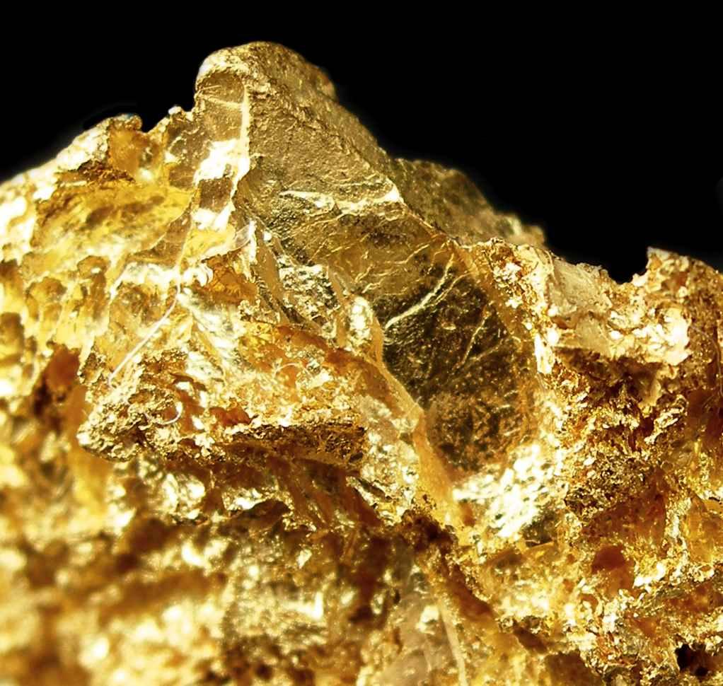 Gold Bugs Bathe In The Warm Summer Sun